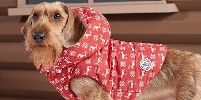 You would possibly presumably well perchance additionally now pick dressmaker puffer coats to your dog