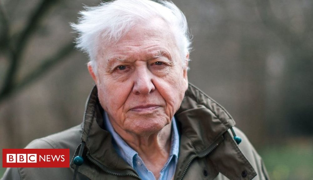 Hollywood News Day-to-day: Attenborough native climate warning and Bowie images revealed