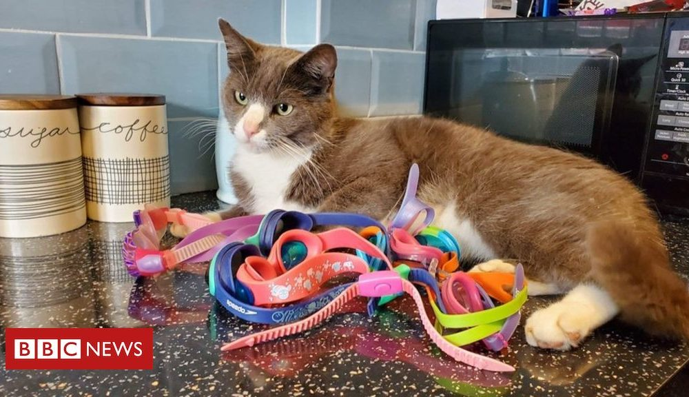 Cat owner baffled by pet's swimming goggles antics